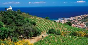 Vignoble-Languedoc